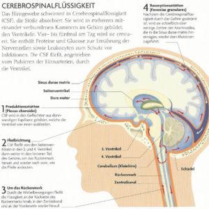Cranio-Sacrale Osteopathie